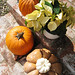White Poinsettias and pumpkins+outdoor thanksgiving decor