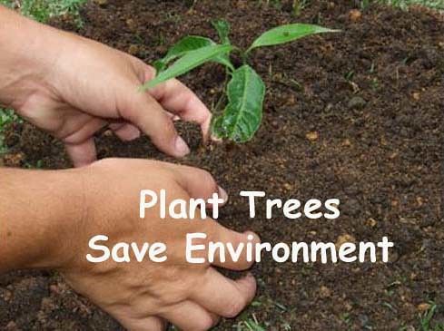how to keep our environment clean and safe essay