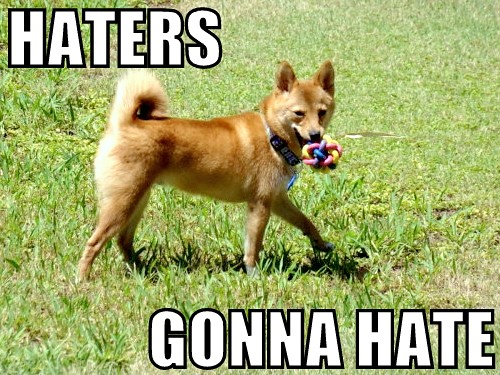 Taro The Shiba Haters Gonna Hate Taro Replicates The