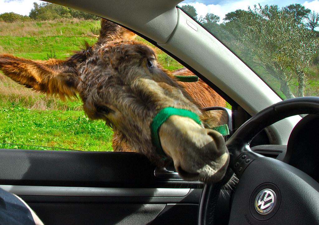 What Is Bmw >> OK, let me drive...   Driving donkey, Odemira, Alentejo ...