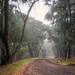 Down the Foggy Path