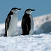 Chinstrap penguins on ice, Antarctica