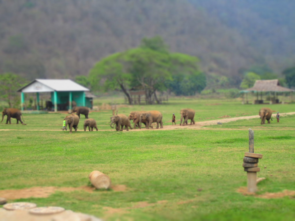 Elephant Nature Park Chiang Mai Day Trip