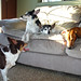 2011-02-21 - Dogs! - 0055