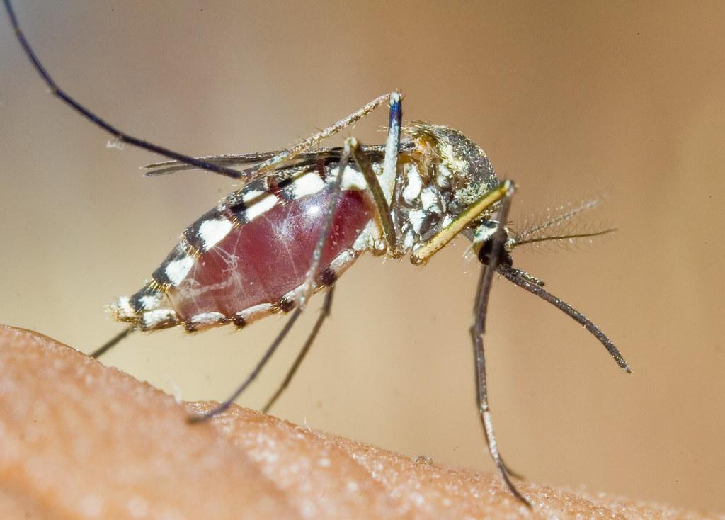 nejnebezpečnější zvířata světa komár
