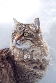 Cat in the snow | by TomFalconer
