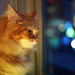 Cat Yearns for Its Own Notion of Freedom, Ignorant of the Realities of Life on the Street
