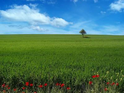 Clima continental praderas o estepas el clima for Arboles de hoja perenne para clima continental