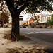 Toomer's Corner blended photo