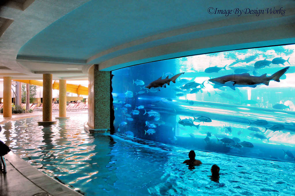 Shark tank pool the golden nugget in downtown las for Shark fish tank