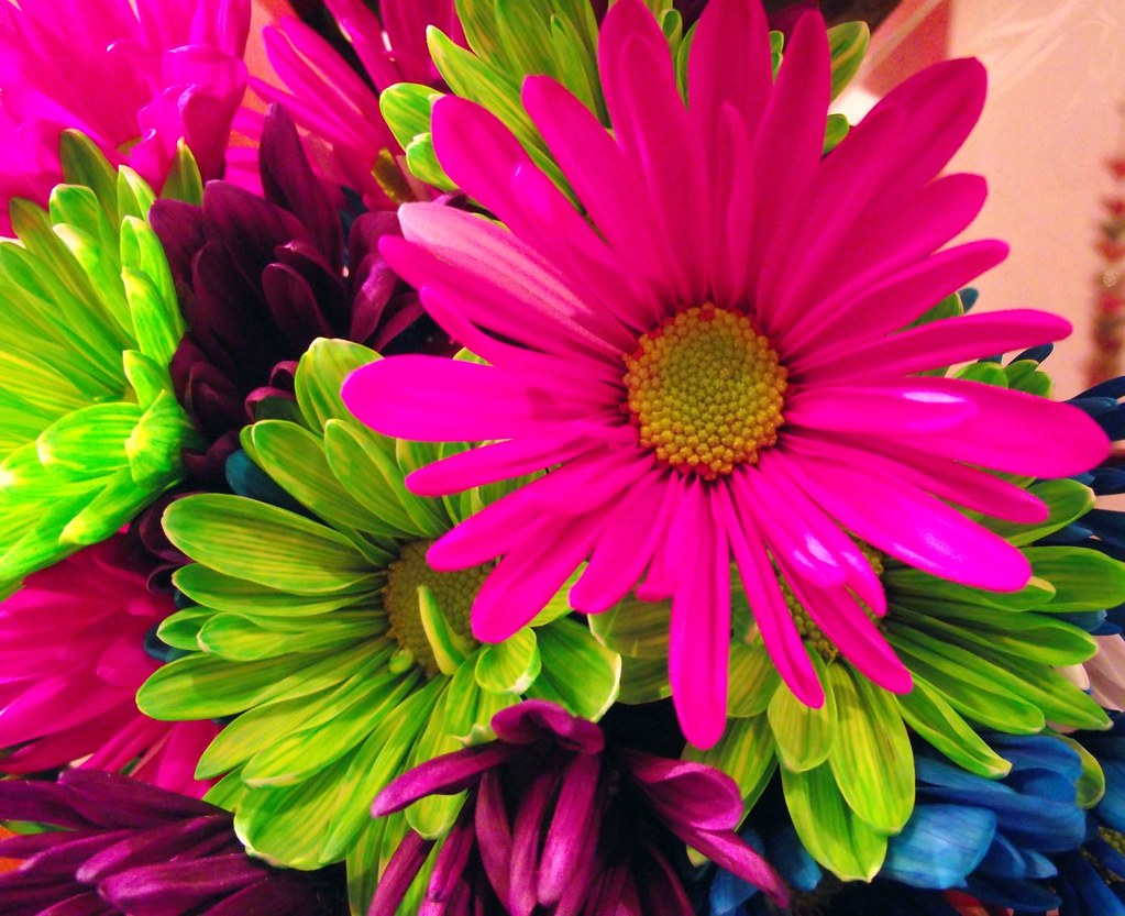 Neon Bright! | Yes, the flowers really were this color and ...