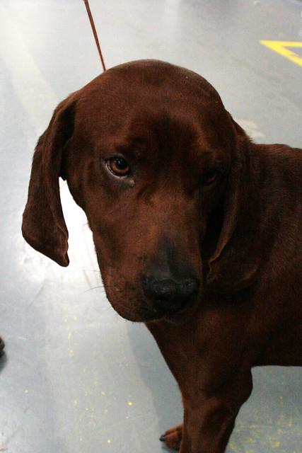 Coonhound Dog Food