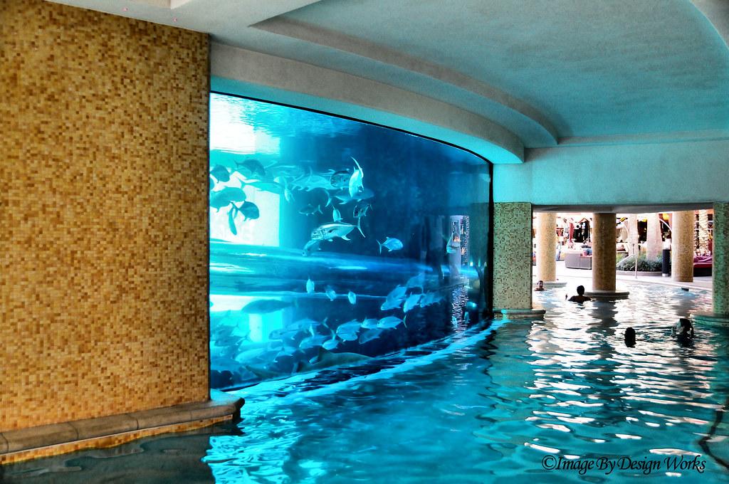 Shark tank pool 2 explored view on black the golden for Fish tank las vegas