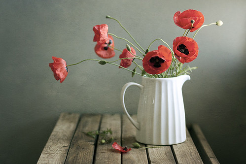 Poppies | by Xaomena