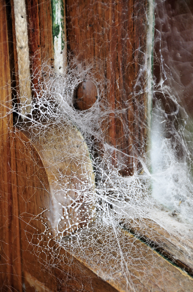 House Spider Web Sprayed Web Of A Black House Spider