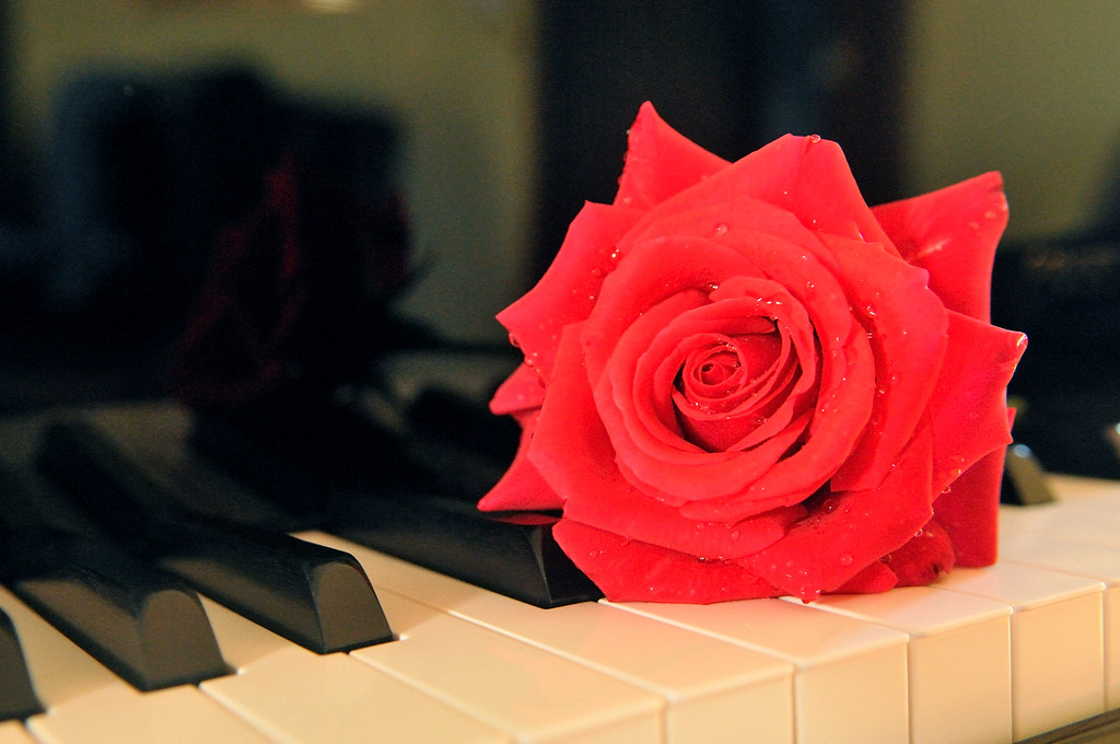 Black And White Photography Roses on Pianos Red Rose on Black Piano