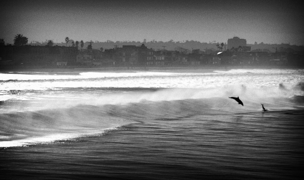 San Diego Dolphins Black & White | I managed to catch a ...