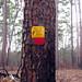 Jones State Forest