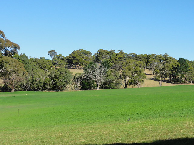 Flickr photo sharing for Adelaide hills landscape