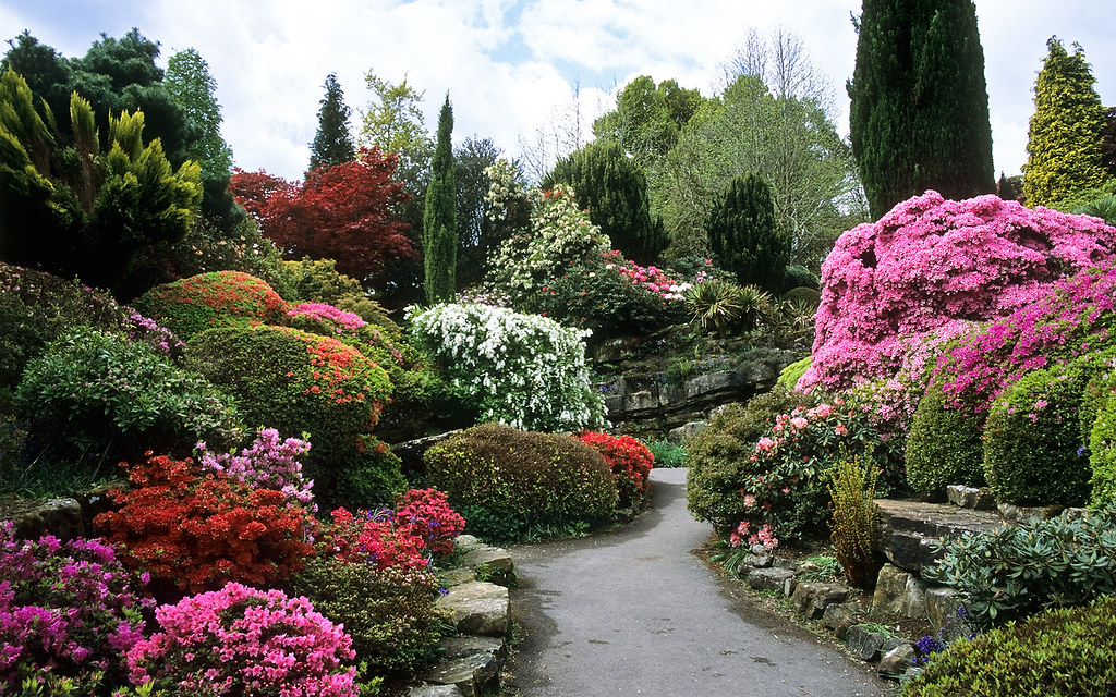 Rock garden at leonardslee gardens west sussex uk leon for Flowers for japanese gardens