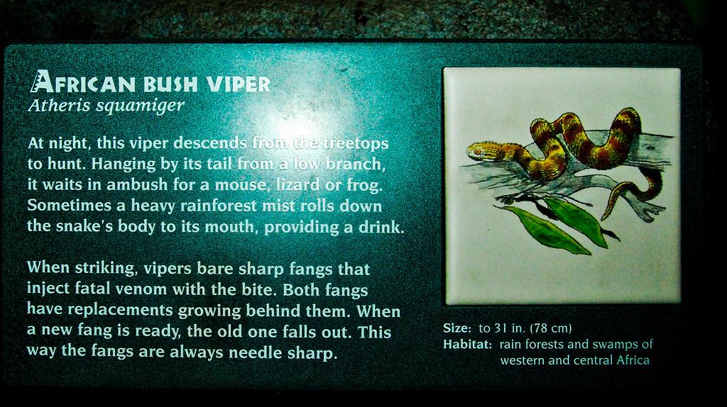African Bush Viper Information Sign Denver Zoo