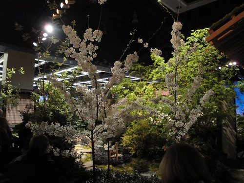 Cherry Trees in bad lighting | by RHR Horticulture
