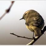 El difícil arte de fotografiar aves pequeñas (y 2)