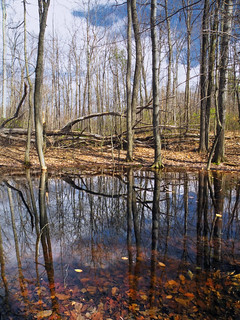 Vernal Pool | by Nicholas_T