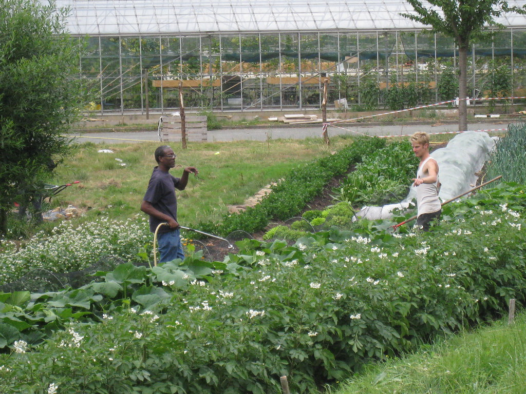 Groups like OrganicLea have great experience in engaging local people and creating real wealth through cooperative social enterprises and permaculture design.