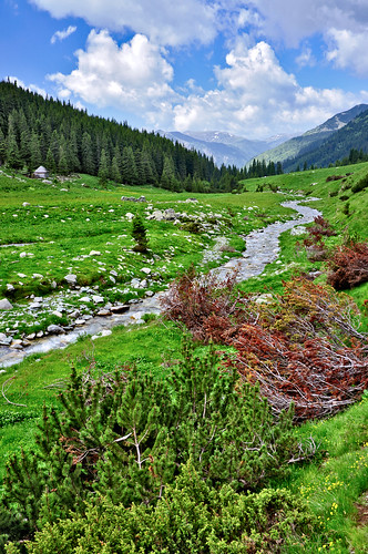 Winding mountain river flowing into the distance | by Horia Varlan