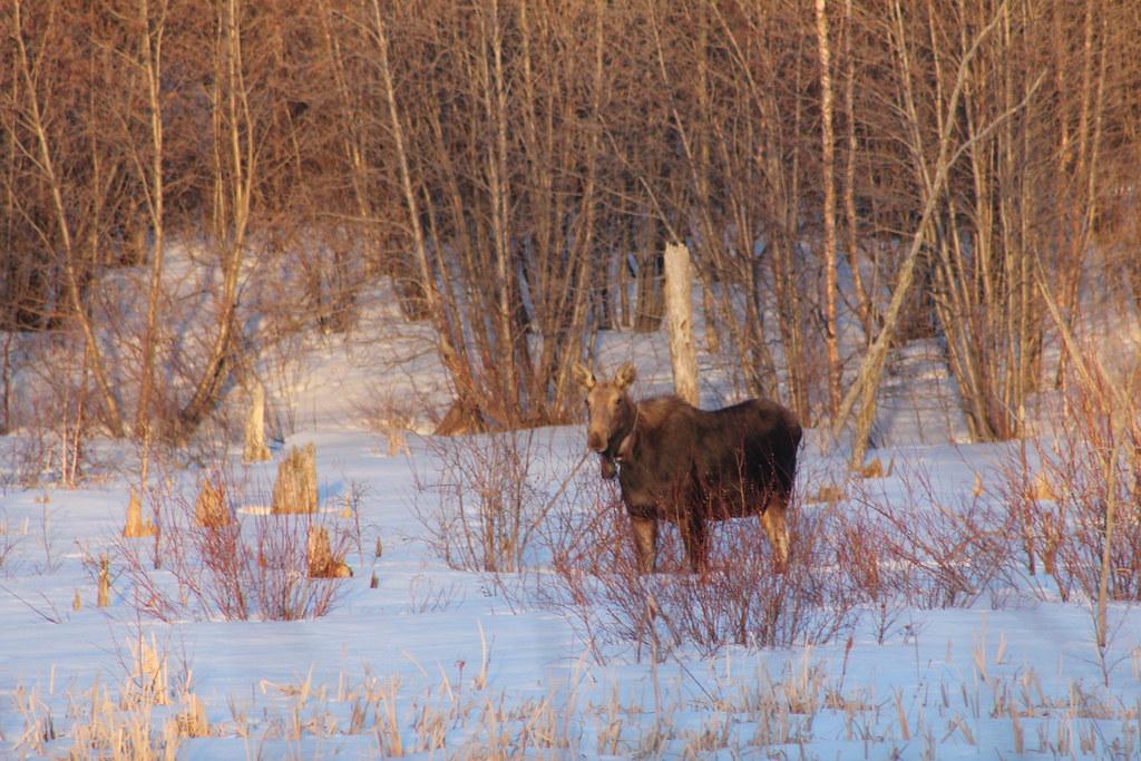 Elk Island National Park Positive Impace