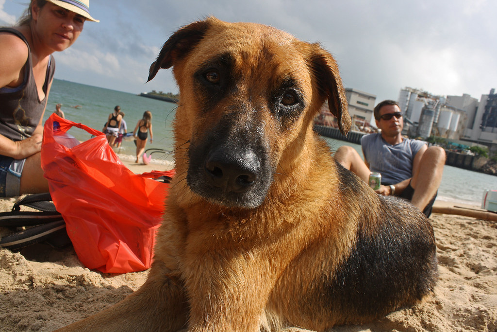 Dog Trainer Jobs Victoria Bc