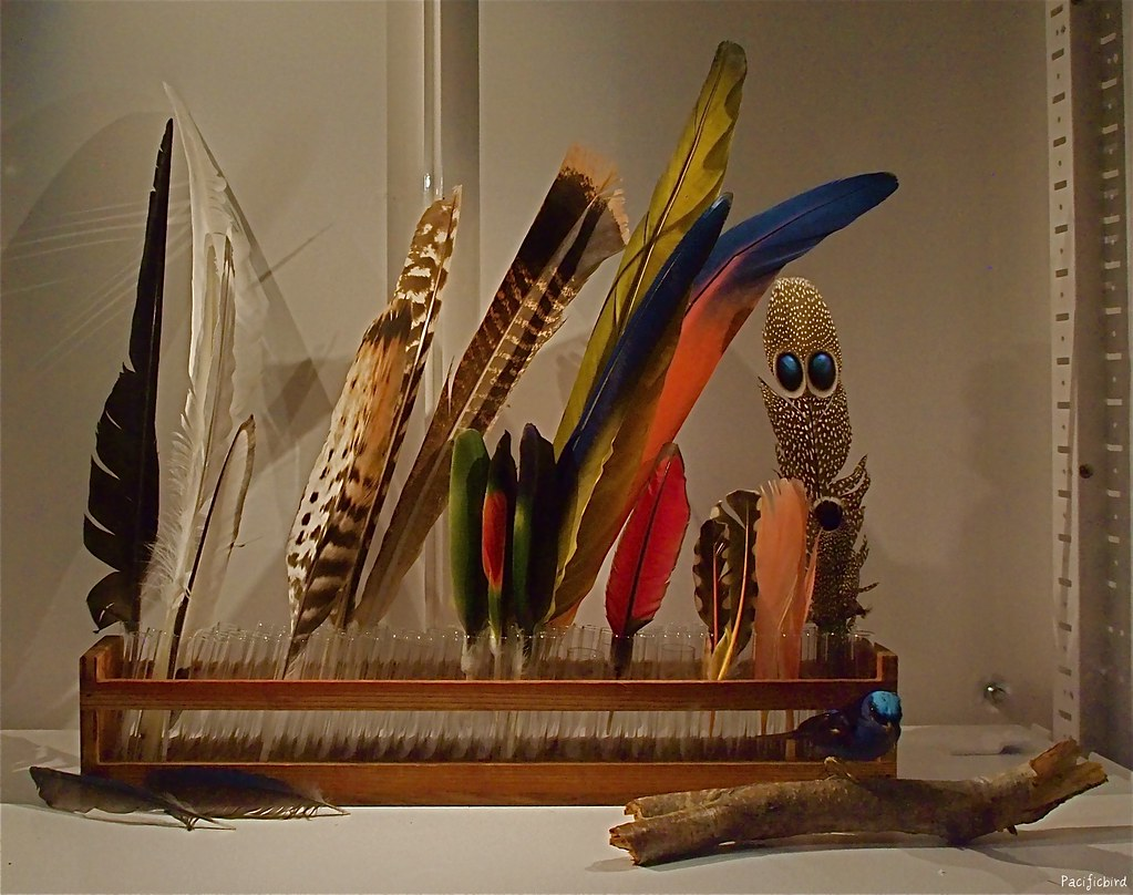 feather display seen at beaty biodiversity museum ubc