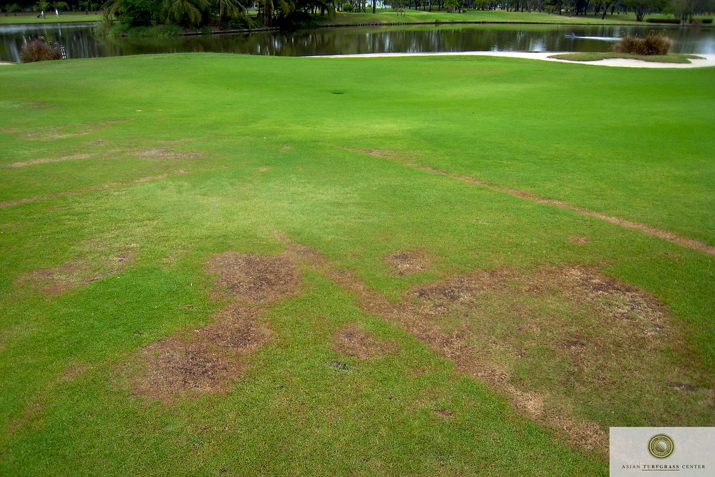 Paspalum And Zoysia On A Fairway In Thailand An
