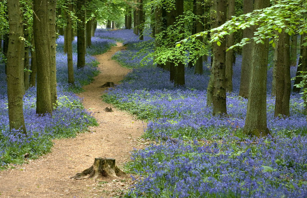 Woodland Path   Taken on a visit to Dockey Woods, part of ...
