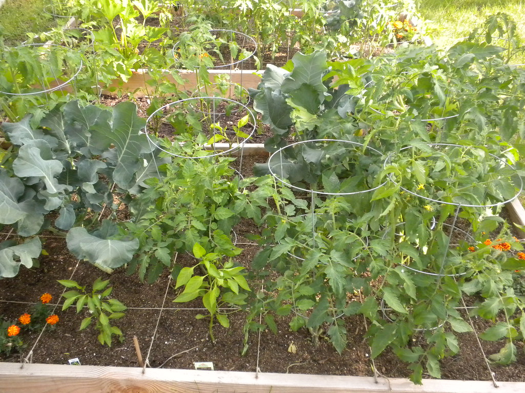 Tomato Plants Peppers And Broccoli In Square Foot Garden Flickr