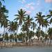 Salalah palms old town - Oman
