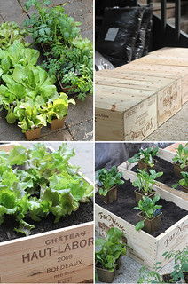 diy: wine box vegetable garden | by the style files