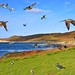 A bird photographers  paradise