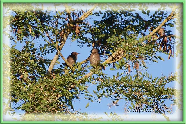 Petit couple d 39 oiseaux du jardin flickr photo sharing for Oiseaux du jardin