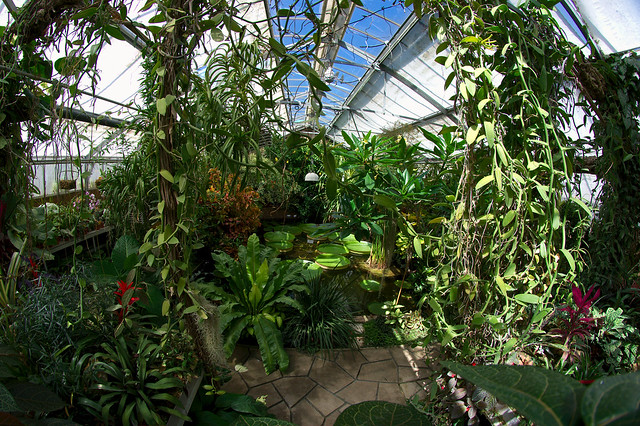 Serre du jardin des plantes flickr photo sharing - Serres jardin des plantes ...