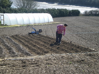 planting the spuds | by becs4trees