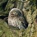 What Big Eyes!!  (Little Owl Owlet)