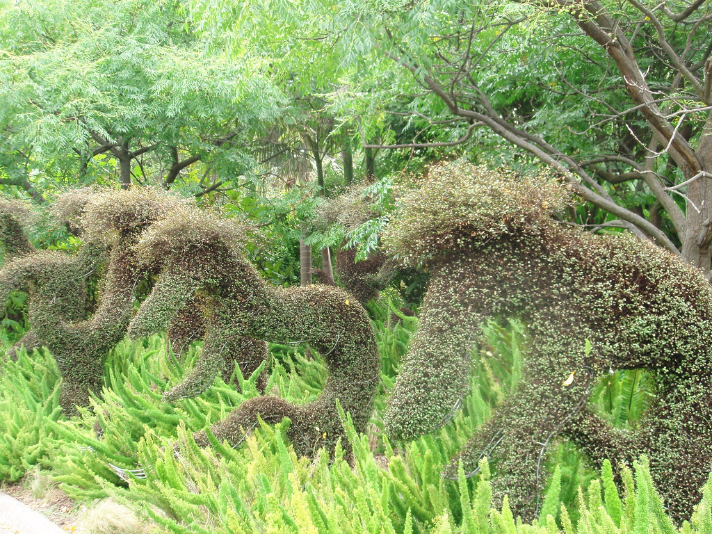topiary in botanic gardens melbourne ellen forsyth flickr