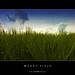 Wheat Field [Explored 2011-05-22 #486]