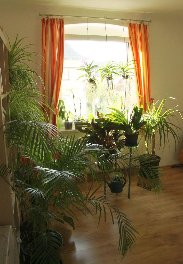 pflanzen wohnzimmer april 2011 canon eos 40d ef s 17. Black Bedroom Furniture Sets. Home Design Ideas