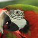 Peckish Parrot