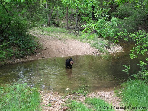 Lucky Buddy Bear taking a dip in the wet weather creek | by Farmgirl Susan