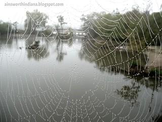 Spiderweb on Main Street Bridge
