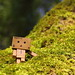 Danbo in the tree moss